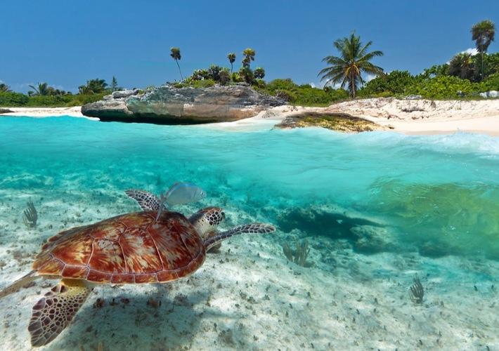 cozumel mx sea turtle